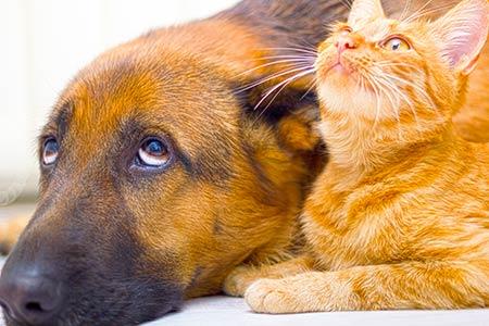 Hund und Katze liegen auf den Boden und schauen nach Oben